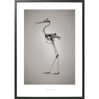 himantopus-mexicanus-poster