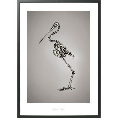platalea-leucorodia-poster